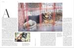 Protokoll der Befreiung zweier Hunde aus einem Zoo in Gaza